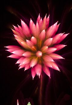 Pictures of fireworks taken as the camera refocuses