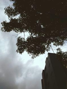 Tree-Sky-Building