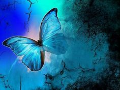 This is the shade of butterfly I fell in love with when I was a little girl and decided then, my favorite color was blue.