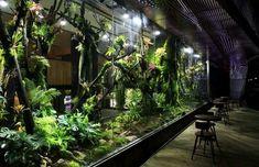 gigantic vivarium Frog Terrarium, Aquarium Terrarium, Reptile House, Reptile Room, Lizard Habitat, Zoo Architecture, Growing Gardens, Aquarium Design, Animal Room