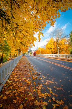 Yellow-leaved autumn trees stretch down their boughs to embrace a road in Vernonia, Oregon.