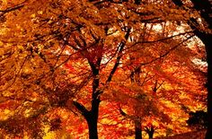 the planning process: color inspiration / fall trees