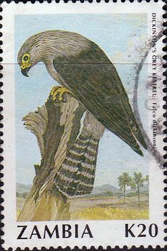 Postage stamps of Zambia 1987 Birds SG 492 Olive-flanked Robin Chat Surcharged Fine Used Scott 389  Other Zambia Stamps HERE