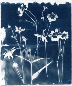 Pam Lostracco: Cyanotypes