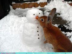 Snow Man Bunny Kisses