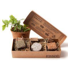 Cajas con tres bombas de semillas de aromáticas