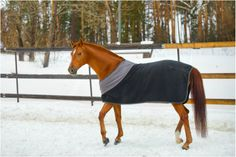 Four reasons to blanket your horse in winter