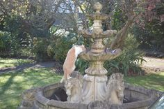 Humpfrey takes a drink of bird flavoured water. Studio 202, Fountain, Bird, Drink, Water, Garden, Outdoor Decor, Gripe Water, Beverage