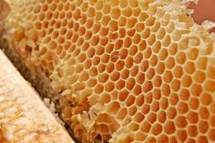 """Teen beekeeper Orren Fox knows that the key to delicious food is quality ingredients. Rodale News by Ramin Ganeshram """"Honey comb02"""". Licensed under GFDL 1."""