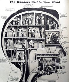 The inside of your head is where all of our thoughts, functions, and feelings come from. This vintage infographic shows where all of the important jobs of our brain are located within our heads. When you hear of someone who has had a head injury and certain bodily functions stop working this is because our …