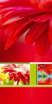 #PC #Glueckwunsch #Karte rote #Gerbera