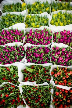 Tulips at the Amsterdam Flower market My Flower, Fresh Flowers, Beautiful Flowers, Beautiful Gorgeous, Spring Flowers, Amsterdam Flower Market, Romantic Things To Do, Arte Floral, Planting Flowers
