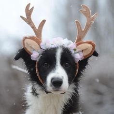 Visit our website to more pictures Cute Dogs Breeds, Dog Breeds, Cute Puppies, Dogs And Puppies, Animals And Pets, Cute Animals, Border Collie Puppies, Collie Mix, Illustrations