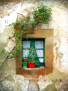 Window in Provence, France Old Windows, Windows And Doors, Window View, Window Dressings, Through The Window, Old Doors, Jolie Photo, Window Boxes, Doorway