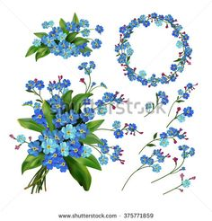 The set of Spring Flowers. Forget me not flowers. Spring vector illustration. Spring flowers isolated on white background. Single flower, wreath, bunch, branches and bouquet flowers. Floral elements.