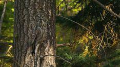 Naturfotograf Art Wolfe