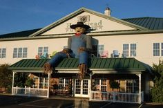 A 20 foot high scarecrow at Homestead Furniture in Ohio's Amish Country