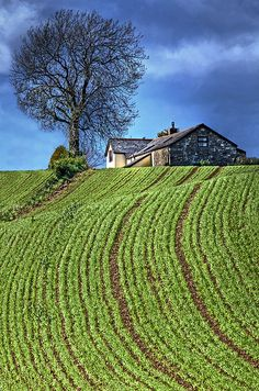 ~~Farmhouse and Field ~ Between Cardiff and Newport, Wales by wentloog~~