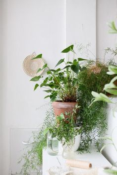 Green plants | Is To Me #greenliving