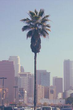 Palms in DTLA
