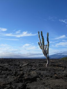 in the Galapagos Islands