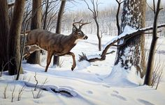 Deer painting by Paul Krapf Deer Photos, Deer Pictures, Animal Pictures, Deer Pics, Wildlife Paintings, Wildlife Art, Deer Paintings, Hunting Art, Deer Hunting