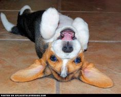 Top 10 Most Lovable Dogs in the World