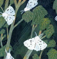 Moths by Becca Stadtlander