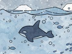 Killer Whale illustration watercolor print by David Scheirer