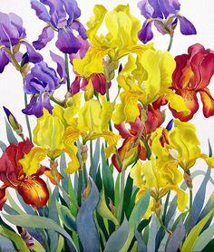 Christopher Ryland paintings Irises