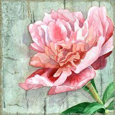I painted this using the beautiful photographs of my dear friend, Stacey Fisher Thomas.  This is actually just a cropped piece of the entire image that I'm now playing with creating an art collection theme from.  I adore Peonies, the weathered wood, crackled fence is such a contrast the the elegance of the Peony.  I don't know where I'm going with this yet, but love it thus far!  You can follow my artwork at:  https://www.facebook.com/audrey.jeannes.expressions