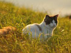 Cats, Photos, Animals, Gatos, Pictures, Animales, Animaux, Animal, Cat