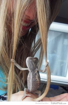 """In the movie """"Tangled,"""" this is adorable. In real life, there's a lizard inexplicably clutching your hair."""