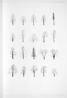 Trees of the U.S.A. III . ink on paper . 47 x 31.5 inches . 2007 - Katie Holten