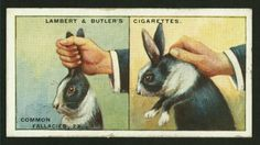 Cigarette card // rabbit myths
