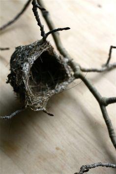 birds nest found in an Aspen tree.