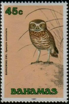 Burrowing owl, postage-stamp-of-owl-bahamas 1991 World Birds, Postage Stamp Art, Owl Bird, Vintage Stamps, Fauna, Mail Art, Stamp Collecting, Burrowing Owl, Illustration