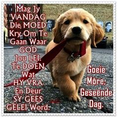 Good Morning Prayer, Morning Prayers, Good Morning Good Night, Good Morning Wishes, Afrikaanse Quotes, Goeie More, Christian Messages, Morning Quotes, Embedded Image Permalink