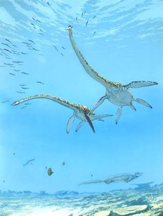 Elasmosaurus: was one of the biggest plesiosaurs of the Mesozoic Era and had 71 vertebrae in its neck.