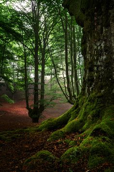 Forest in Basque, Euskal Herria