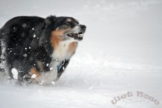 Lisa Snider, Harrisonburg  Ginny is 11 and loves the snow! I love to take photos #WHSVsnow