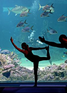 Here's an interesting way to start the day: yoga with the fishes. More on www.latimes.com #yoga #fitness #workouts
