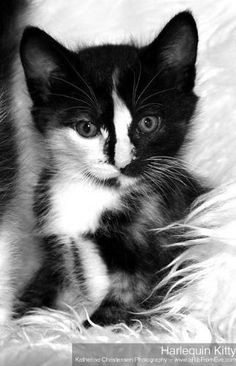 Cute black and white kitten                                                                                                                                                                                 More