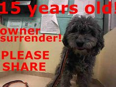 SUPER URGENT 01/07/15 Brooklyn Center   BUDDY - A1024924   MALE, GRAY, POODLE TOY MIX, 15 yrs OWNER SUR - EVALUATE, NO HOLD Reason PET HEALTH  Intake condition GERIATRIC Intake Date 01/07/2015, From NY 11205, DueOut Date 01/07/2015 https://www.facebook.com/Urgentdeathrowdogs/photos/pb.152876678058553.-2207520000.1420672411./939420349404178/?type=3&theater
