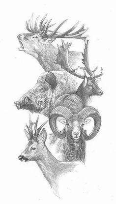 Elk, fallow, boar, mouflon, and roe Animal Sketches, Animal Drawings, Drawing Sketches, Pencil Drawings, Art Drawings, Hunting Drawings, Hunting Tattoos, Deer Art, Moose Art