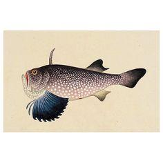 Chinese fish album - Queer postcards