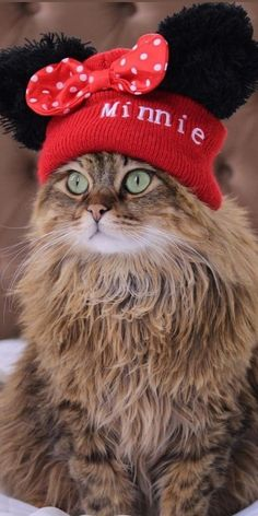 Beautiful Cats, Animals Beautiful, Image Chat, Cute Love, Beautiful Creatures, Cats And Kittens, Cute Cats, Owl, Crochet Hats