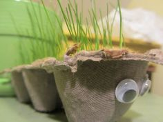 """woolie bear grass """"caterpillars""""-- plant egg carton with potting soil and grass seed.  Adorable!"""