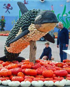 An employee arranges an exhibit at a pumpkin-inspired art show in Klaistow near Beelitz, north-eastern Germany. Reef Aquarium, Saltwater Aquarium, Pet Recycling, Aquarium Pictures, Ocean Theme Crafts, Racing Extinction, Pumpkin Photos, Monterey Bay Aquarium, Animals