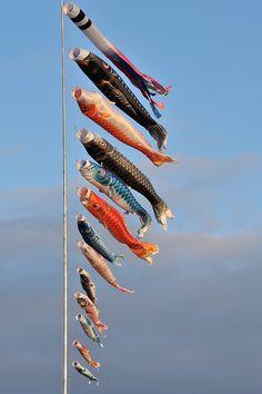 The Carp Streamers - Biei,Hokkaido,Japan. Boys Day, Child Day, Carpe Coi, Koi, All About Japan, Amaterasu, Nihon, Okinawa, Japanese Culture